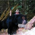 Alaska Bear and Sitka Deer Hunt