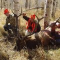 Colorado Elk Hunt GMU 80, 81 DIY Hunt