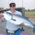 Stripers and 'Moore' Fishing Guide Service