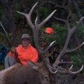 New Mexico Elk, Mule Deer, Bear Hunts Unit 51, 52