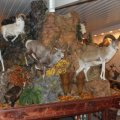 Mount-N-View Taxidermy