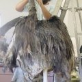 Avian Preservation - Quality Bird Taxidermy