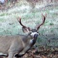 Oregon Trophy Blacktail Trespass Hunt