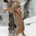 Idaho Bear, Mountain Lion, Wolf Hunts in the Bitterroots