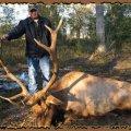 Texas Whitetail Deer, Mule Deer, Elk, Bison, Exotic Hunts near Sanderson