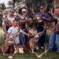 Utah Moose, Elk, Mule Deer, Antelope, Black Bear Hunts, Book Cliffs, South Slope Diamond Mtn. Bonanza, and North Slope 3 corners limited entry units