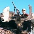 Idaho Moose Hunts Units 73, 74, 75, 77, & 78