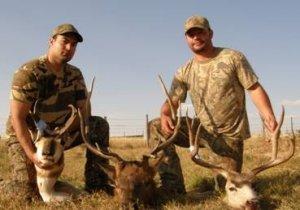 Colorado Elk, Mule Deer, Antelope Hunts Northwest Colorado GMU 3,4