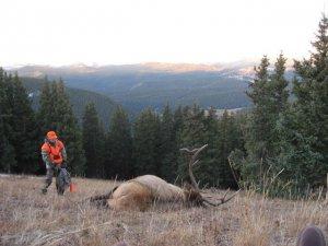 Colorado Trespass, DIY Hunt in Northwestern Colorado, Mule Deer, Antelope, Mountain Lion and Bear