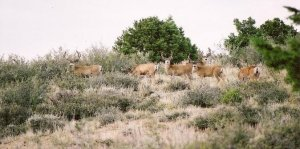 Utah Elk Mule Deer Moose Bear Cougar Hunts