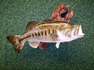 Dan's Fish Taxidermy