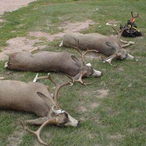 Nebraska DIY Mule Deer Hunt 700 acres private land